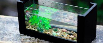 чистый аквариум