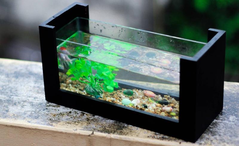 Уход за домашним аквариумом: как правильно его чистить и менять воду
