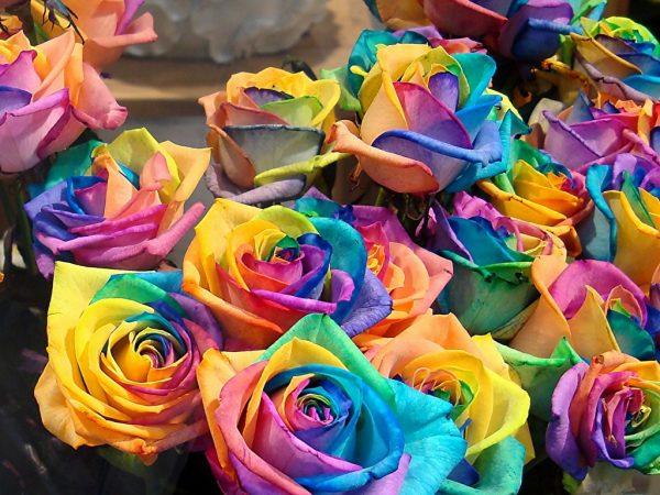 Цветы, окрашенные пищевым красителем