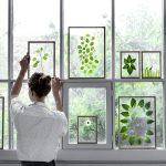 Гербарии в стекле на окнах