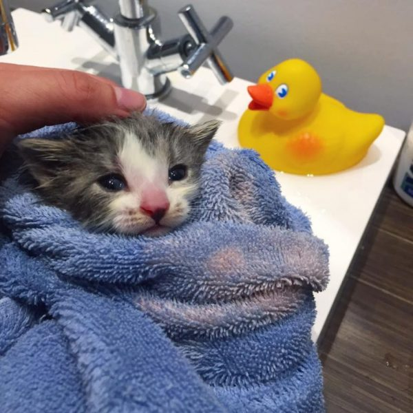 Котёнок в полотенце