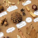 Хранение образцов в познавательных целях