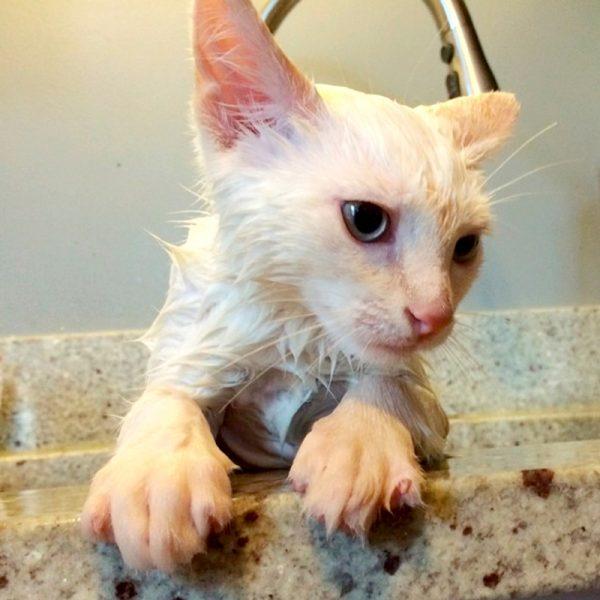 Мокрый котёнок