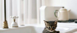 Как искупать котёнка