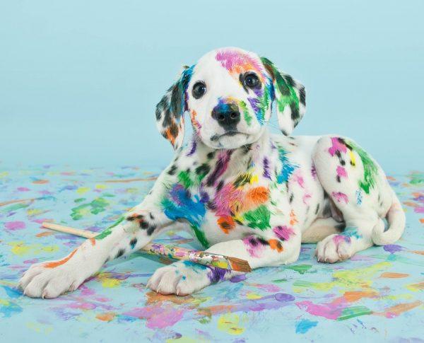 Собака в краске