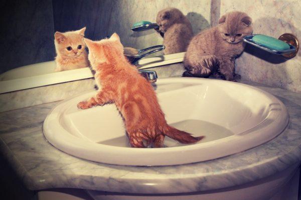 Котёнок в раковине