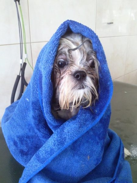 Собака в полотенце