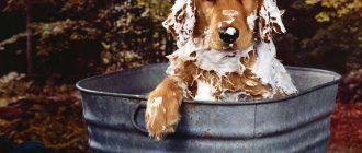 как помыть собаку
