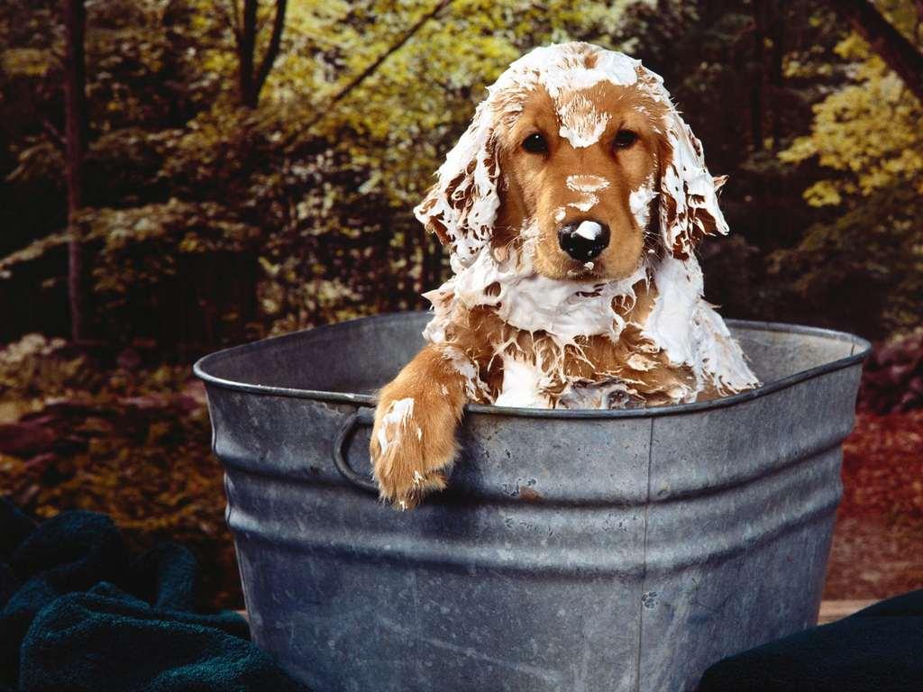 Купание собак: переходим к водным процедурам