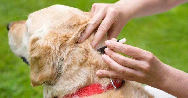 Капли от блох для собак: как выбрать и применять
