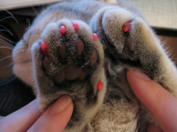 Кошачьи лапы с силиконовыми накладками на когтях
