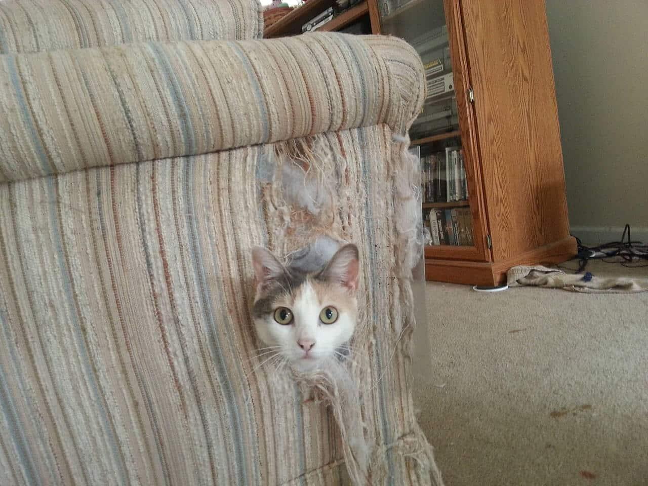 Как отучить кошку драть обои и мебель: практические советы