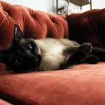 Кошка на диване из замши
