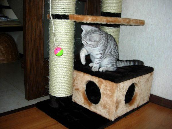 Кошка в игровом центре