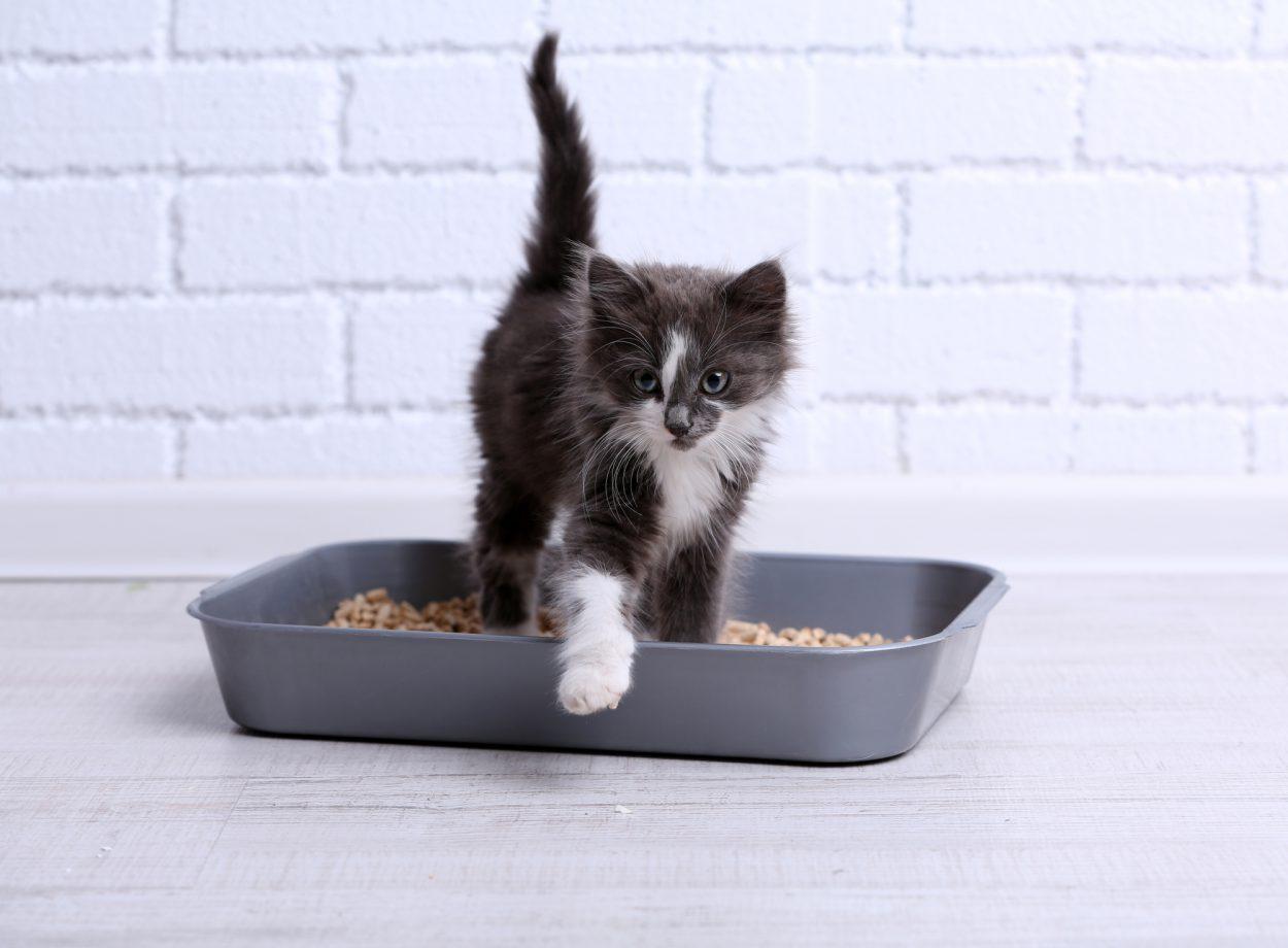 Как приучить кошку к туалету: основные правила и главные нюансы