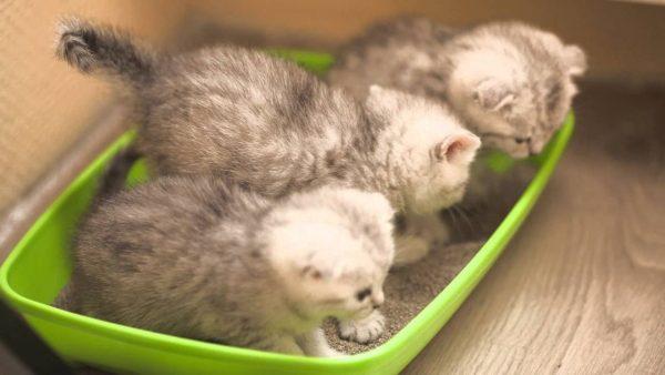 Котята в лотке
