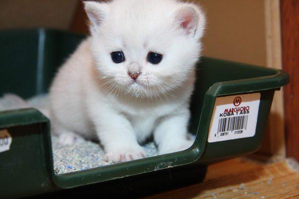 Маленький котёнок в лотке
