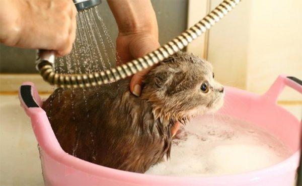 мытьё кошки