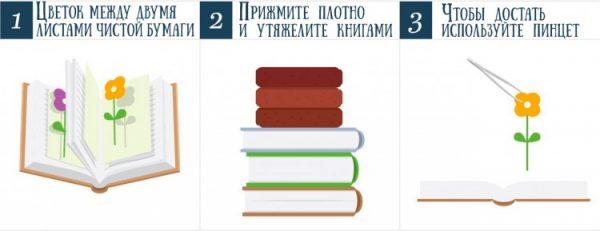 Пошаговое фото-руководство к книжной сушке