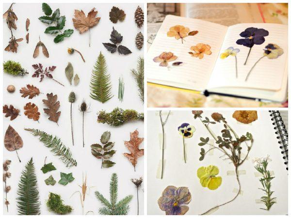 Разнообразие растений для гербария
