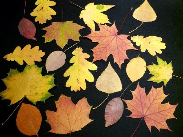 Разные образцы листов