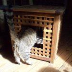 Самодельный туалет для кошек