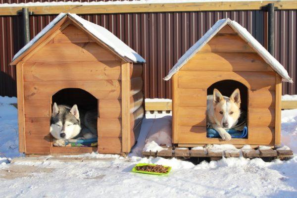 Собаки в будках