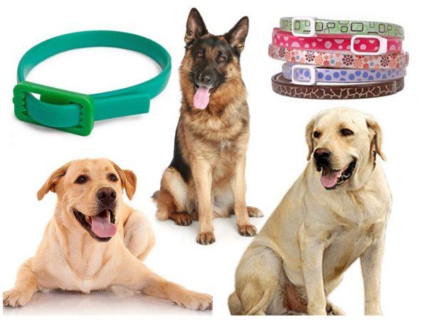Собаки и ошейники