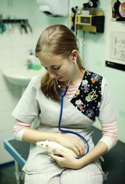 Ветеринар с крысой