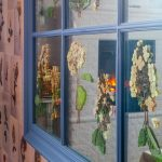Засушенные растения на окнах