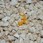 Зерновой (кукурузный) наполнитель