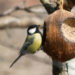 Кормушка для птиц из кокоса