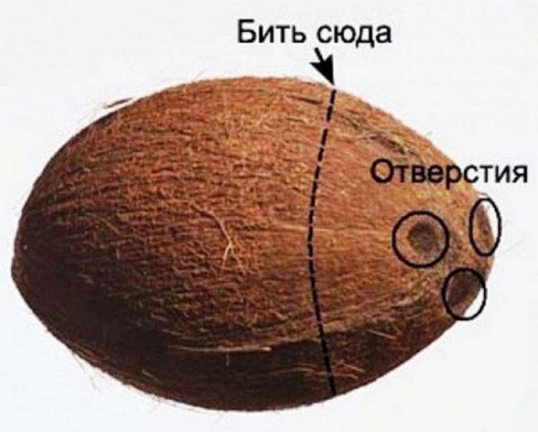 Схема открытия кокоса