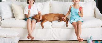 Мягкая мебель создаёт уют в квартире, но требует аккуратного обращения и хорошего ухода