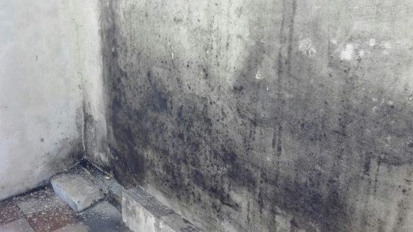 Плесень на стене