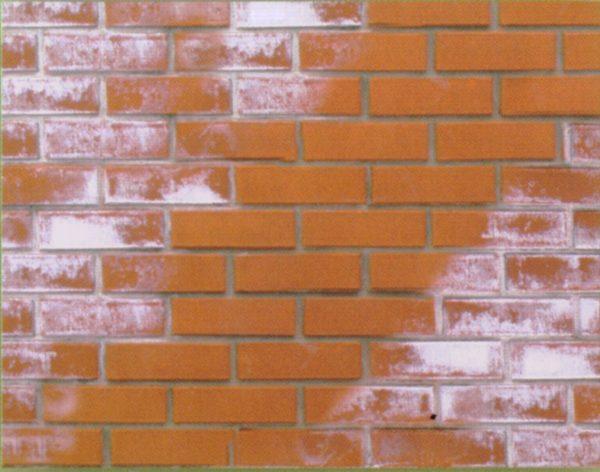 Высол на кирпичной стене