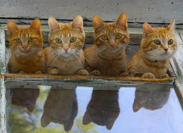 дома много котов