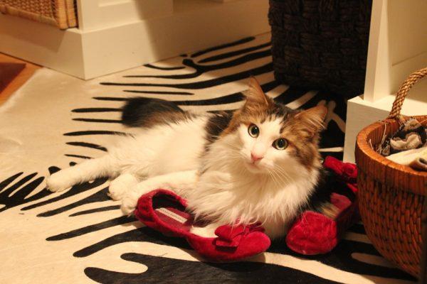 Кошка и домашние тапочки