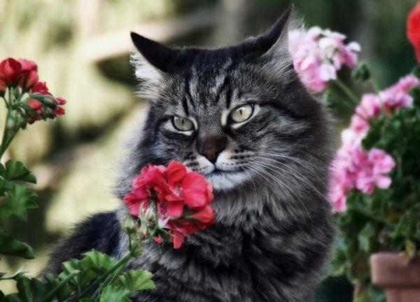 кот отравился эфирным маслом