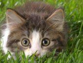кот в траве