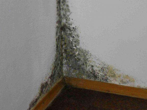 Плесневый грибок на стене