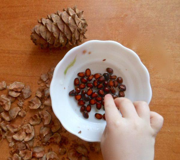 Кедровые орехи в кипятке