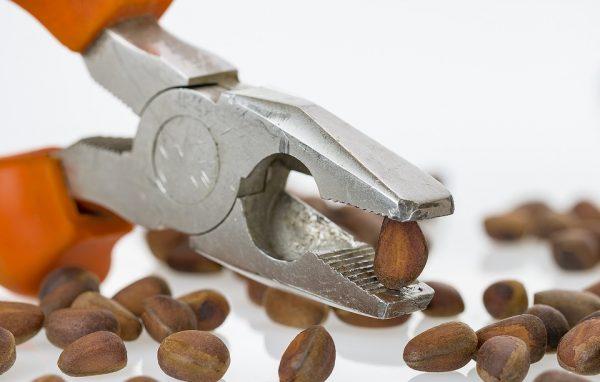 Плоскогубцы и кедровые орехи