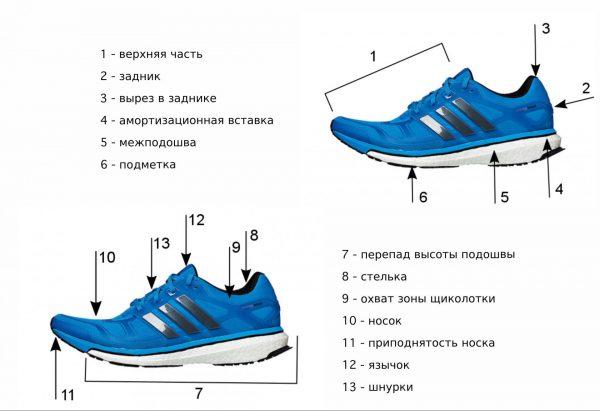 Схема строения подошвы кроссовок