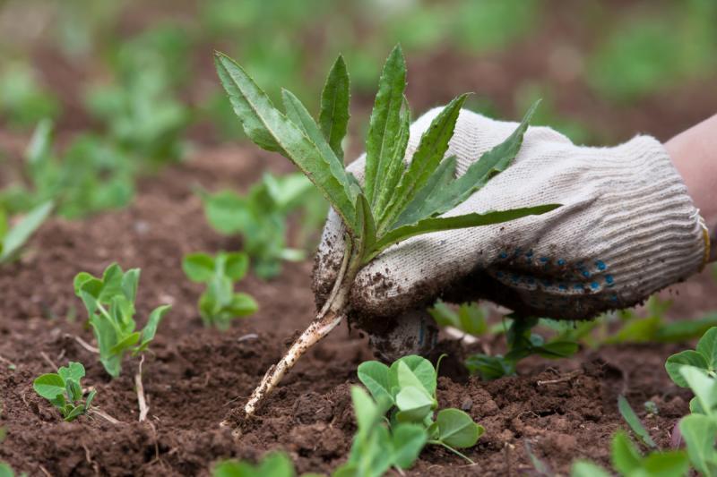 Как можно избавиться от травы