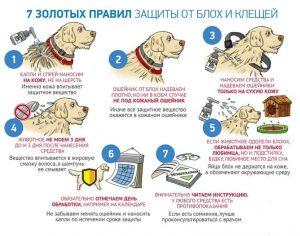 правила защиты